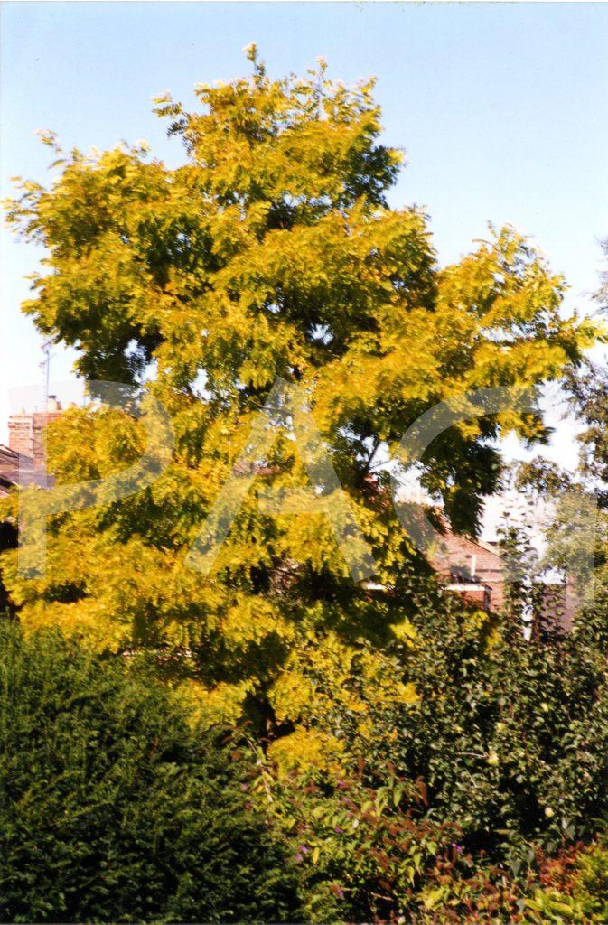 Tree - summer