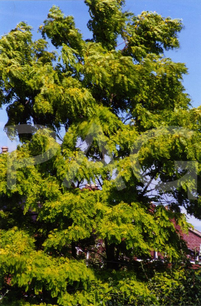 Tree- wind